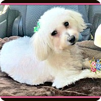 Adopt A Pet :: Katie - Rancho Cucamonga, CA