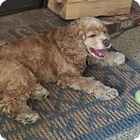 Adopt A Pet :: Lexie - Santa Barbara, CA