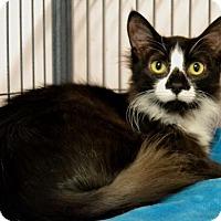 Adopt A Pet :: Fern - Waxhaw, NC