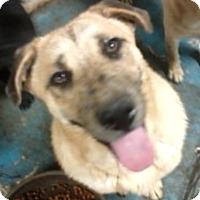 Adopt A Pet :: Prince #2 - Graceville, FL