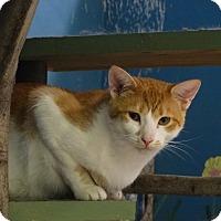 Adopt A Pet :: Ghetti - Elyria, OH