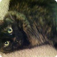 Adopt A Pet :: Fifi - Lincoln, NE