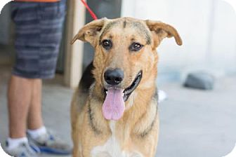German Shepherd Dog Mix Dog for adoption in Fresno CA, California - Lobo