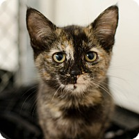 Adopt A Pet :: Bindi - Greenwood, SC