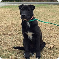 Adopt A Pet :: BlackJack - PRINCETON, KY