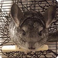 Adopt A Pet :: Simba - Patchogue, NY