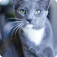 Adopt A Pet :: Blossom - Athens, GA