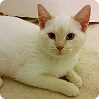 Adopt A Pet :: Ivan - Chattanooga, TN