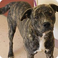 Adopt A Pet :: Carter - McDonough, GA