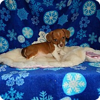 Adopt A Pet :: Ellie Foster #4 Adopt Pending to Yelton - Old Fort, NC