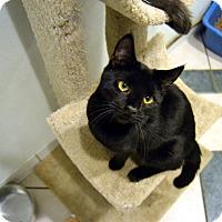 Adopt A Pet :: Midnite - Broadway, NJ