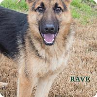 Adopt A Pet :: Rave - Walnut Creek, CA