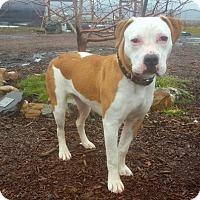 Adopt A Pet :: Olive - Yreka, CA