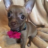 Adopt A Pet :: Cora - Mesa, AZ