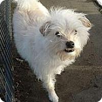Adopt A Pet :: Buddie - Prole, IA
