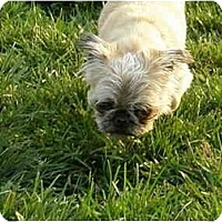 Adopt A Pet :: Bingo - Meridian, ID