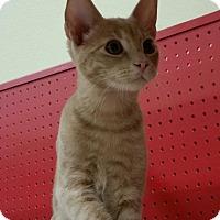 Adopt A Pet :: Timberlake - Phoenix, AZ