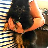 Adopt A Pet :: Cricket - Silsbee, TX