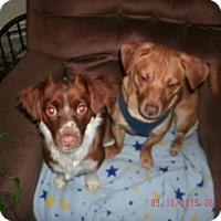 Adopt A Pet :: Bonnie & Clyde - Acushnet, MA
