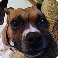 Adopt A Pet :: Layla - Wilmington, NC