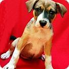 Adopt A Pet :: Trudy Cooper