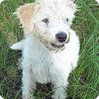 Adopt A Pet :: Corky - Waller, TX