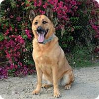 Adopt A Pet :: Natasha - San Diego, CA