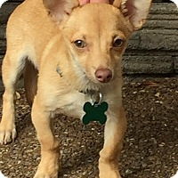 Adopt A Pet :: FAWN - Stamford, CT