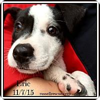 Adopt A Pet :: Eric In Austin, Texas - San Antonio, TX