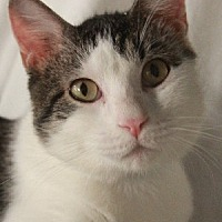 Adopt A Pet :: Willoughby - Savannah, MO