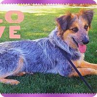 Adopt A Pet :: MAGGIE MAY - Chandler, AZ