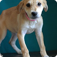 Adopt A Pet :: Honey - Waldorf, MD