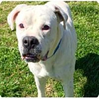 Adopt A Pet :: Finn - Jacksonville, AL