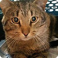 Adopt A Pet :: Eddie - Salem, NH
