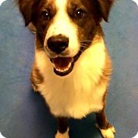 Adopt A Pet :: Colby - Bradenton, FL