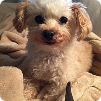 Adopt A Pet :: Winston - Atlanta, GA