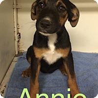 Adopt A Pet :: Annie meet me 6/24 - Manchester, CT