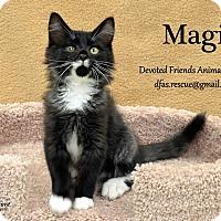 Adopt A Pet :: Magi - Ortonville, MI