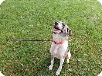 Australian Shepherd Mix Dog for adoption in Buffalo, Indiana - Elizabeth