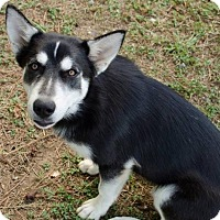 Adopt A Pet :: Sequoia - Brownsboro, AL