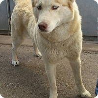 Adopt A Pet :: KONA - Gustine, CA