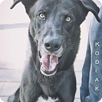 Adopt A Pet :: Kodiak - Nassau Bay, TX