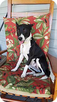 Feist Mix Dog for adoption in Jesup, Georgia - Cookie