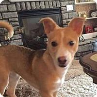 Adopt A Pet :: Foxy - Newport, KY
