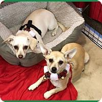 Adopt A Pet :: Freja & Nora - Phoenix, AZ