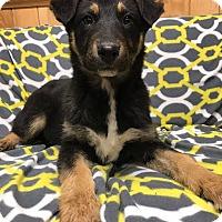 Adopt A Pet :: Raven - Maryville, MO