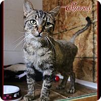 Adopt A Pet :: Smores - Shippenville, PA