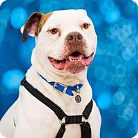 Adopt A Pet :: Champ - Columbus, IN