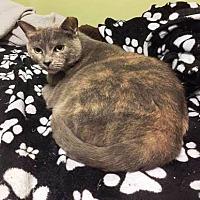 Adopt A Pet :: Mitzie - Tampa, FL