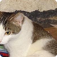 Adopt A Pet :: Smart Loving Pauline'14 - New York, NY